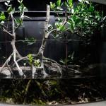 Aquarium Tips with Julian Sprung : Is Algae Filtration Safe for Your Reef Aquarium?