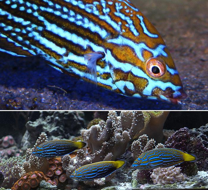top photo by Jake Adams; bottom photo by Sanjay Joshi.