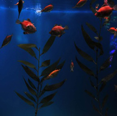 Mediterranean fishes exhibit at the Toledo Zoo.