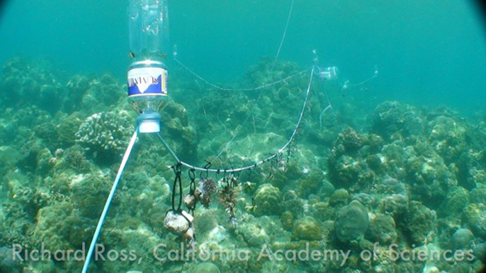 The 'Coral Clothesline', inspired by the Coral Restoration Foundation, in action about 50 meters offshore.