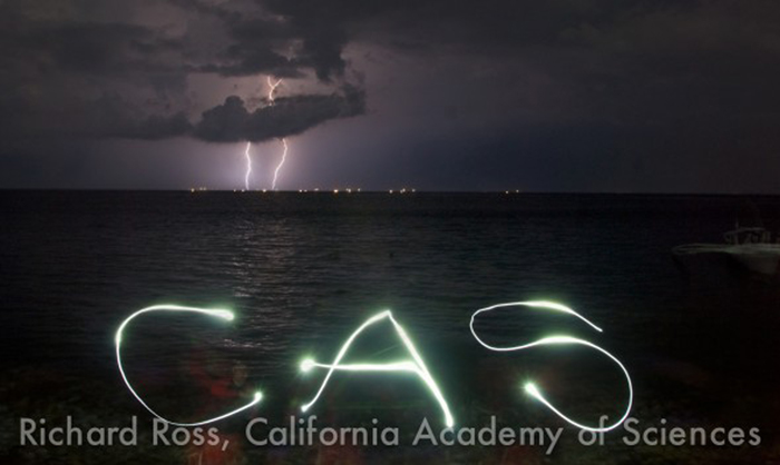 This is a time lapse shot of lightning and Matt Wandell writing CAS (California Academy of Sciences) in the air with a dive light.