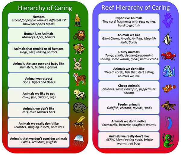 We tend to care more about the well being of animals depending on our emotional attachments to them, as well as their perceived(*1)usefulness or danger to us. Placements on the hierarchy will change over time, and everyone does not have the same hierarchy. The above hierarchies are meant to illustrate some of the often unconscious reasoning that determines a creatures place on the hierarchy.