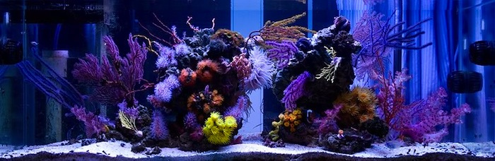 Fine example of a beatifully maintained azoox aquarium with the use of ozone, automated feeding and water changes by Mike Cao.