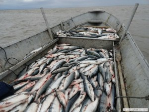 commercial_fishing