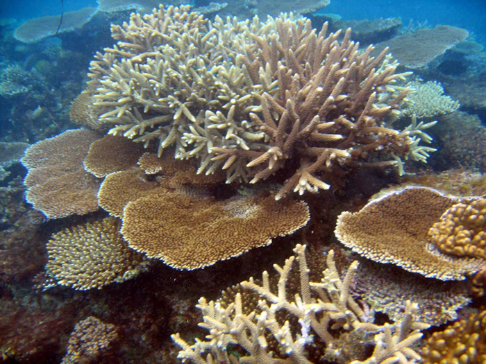 How much of this coral can be sustainably collected? How do you know? Who can you ask?