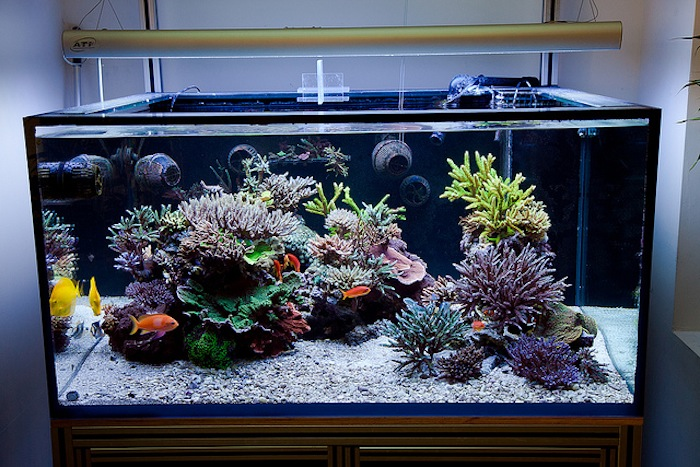 Image result for Aquascaping.