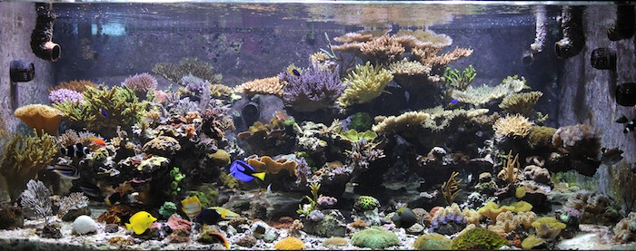 Is this the tank of your dreams? A healthy dose of skepticism might help you get there.