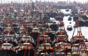 oceans_impacts_seas_degradation_commercial_fishing_trawlers_overfishing_q