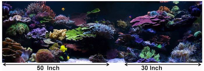 When designing the aquascape of my current 600g tank I incorporated a single gully feature sited at the approximate 5/3 dividing line. In addition two coral island were incorporated with approximate 5/3 ratio. Additionally, the aquascaping by Adrian (shown above) also incorporates the 5/3 division of the coral islands. Photo by Paul Whitby.