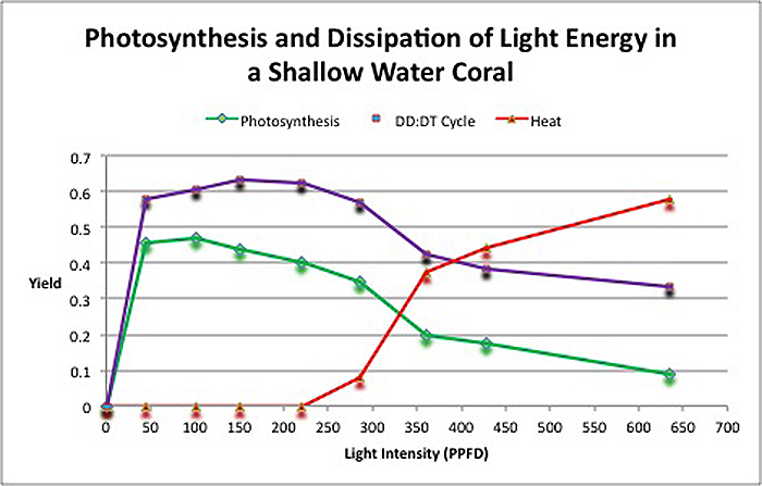 Figure 5. Fate of light energy in the stony coral Pocillopora damicornis. The yield of photosynthesis is initially high but drops with increasing intensity. The protective xanthophyll starts immediately but it too loses efficiency. At about 220 µmol electrons·m²·sec, zooxanthellae begin to dump excess light energy as non-radiant heat.