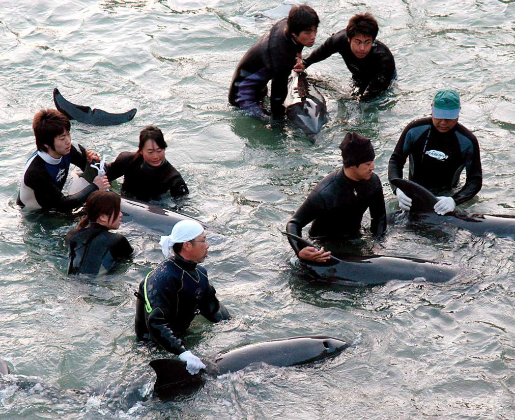 Japan controversial dolphin trade