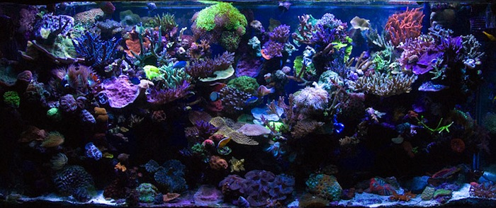 Will that product make your tank look like this...