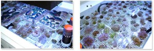 g_coral_072505_6