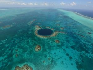 web-coral-reef-ap