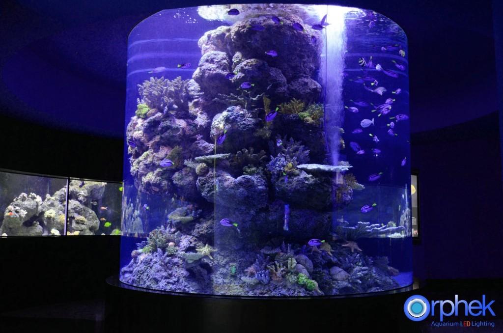 chengdu aquarium 1-reefs