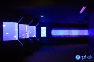chengdu aquarium 3-reefs