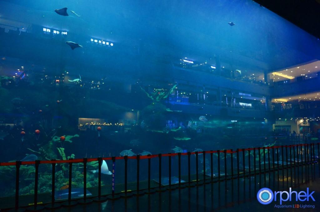 chengdu aquarium 4-reefs