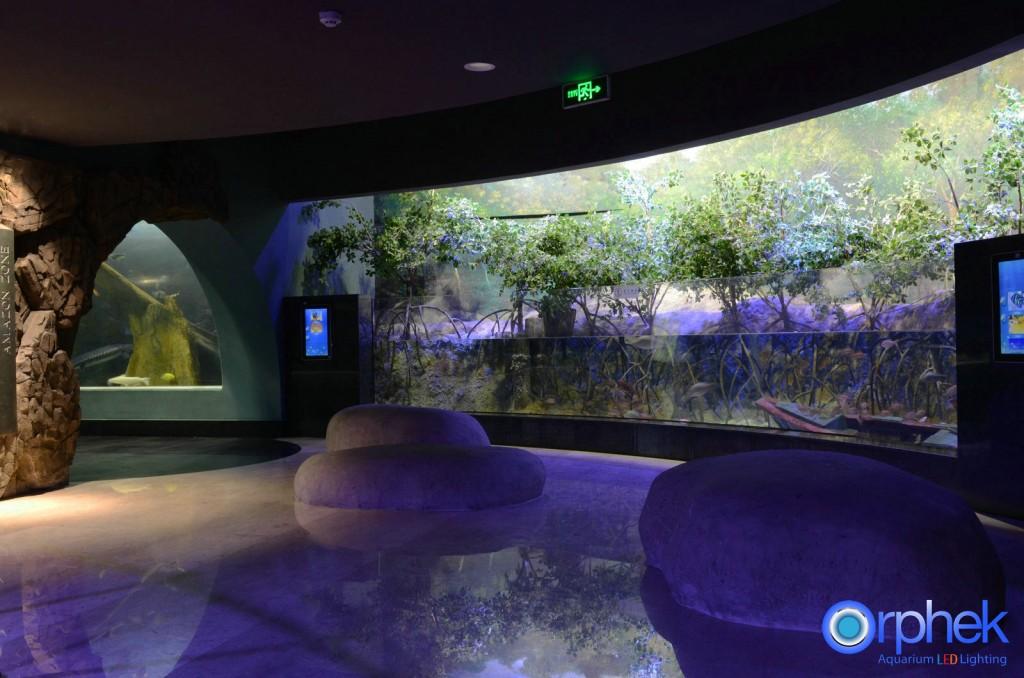 Chengdu S Cube Oceanarium Sets A Record Reefs Com