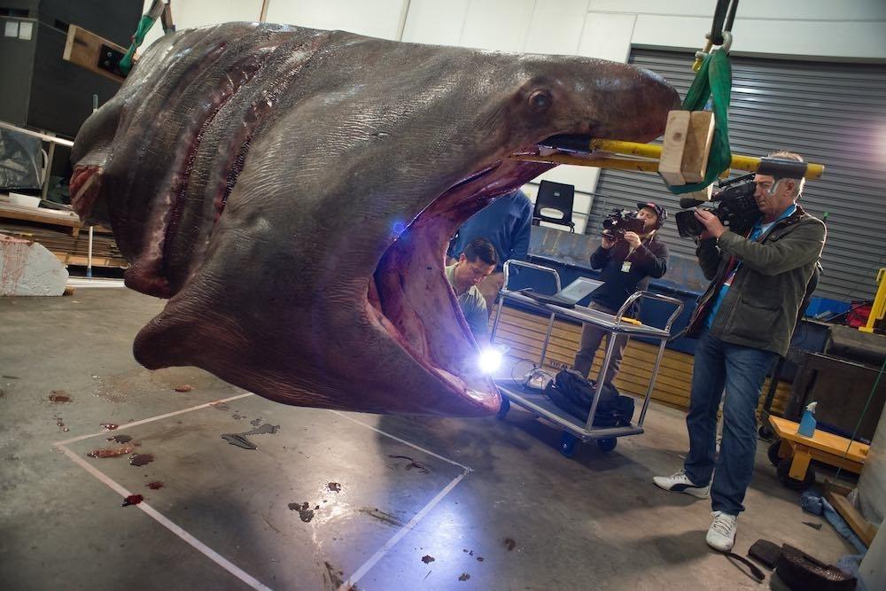 how-do-you-preserve-a-rare-three-tonne-shark-body-image-1437354765-size_1000
