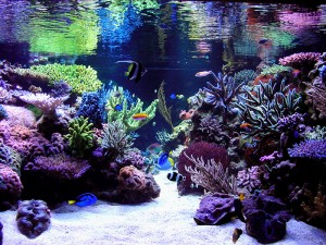 Whitby aquascape - reefs