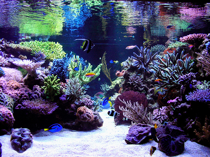 Aquascaping Contest at the Aquatic Experience - Chicago