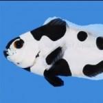 Name Sea & Reef's New Clownfish!