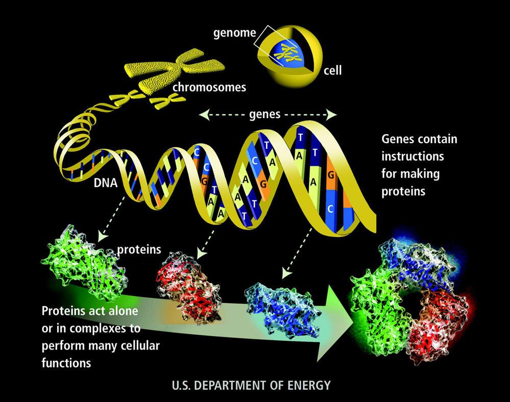 genome-glossary