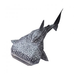 happy paper whale shark davana - reefs