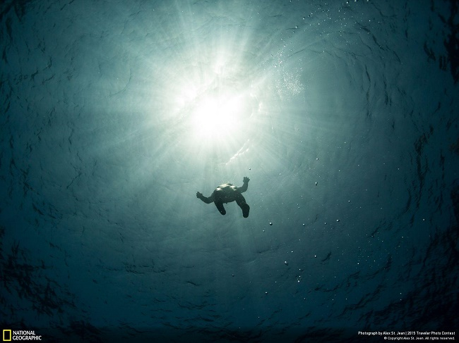 Freediver Carlos Correa ascending towards the light on a break during the 2015 Caribbean Cup of Freediving in Roatán, Honduras. Every time I look at this photo it relaxes me and makes me wonder about how these athletes can reach depths of 300ft. and hold their breath for upwards of 4 minutes. Pensacola, Bay Islands, Honduras Alex St. Jean