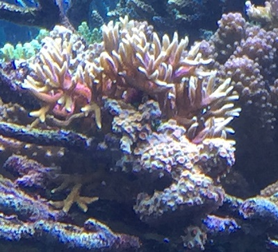 Burger Birdsnest combo justin - reefs