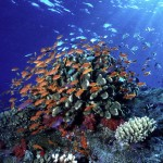 WWF Reports 49% Decline in Marine Animal Populations