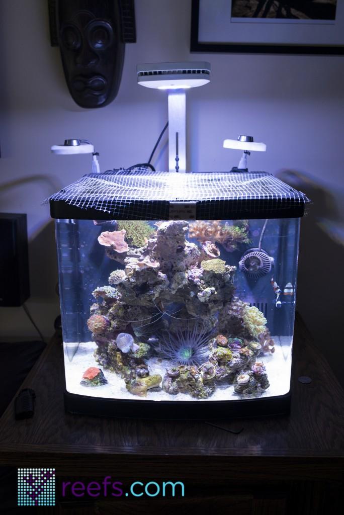 Aquaillumination Prime Led Aquarium Light Review Reefs Com