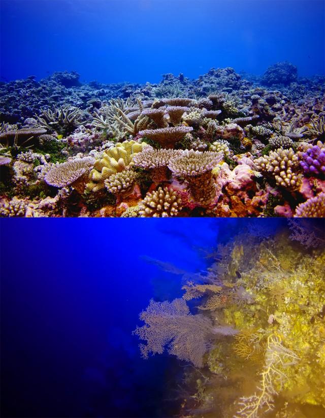 Pohnpei reef - reefs