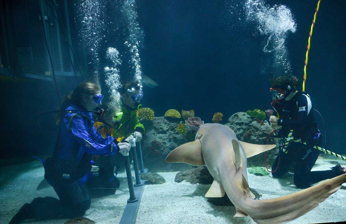 Shark-Dive-PDZA