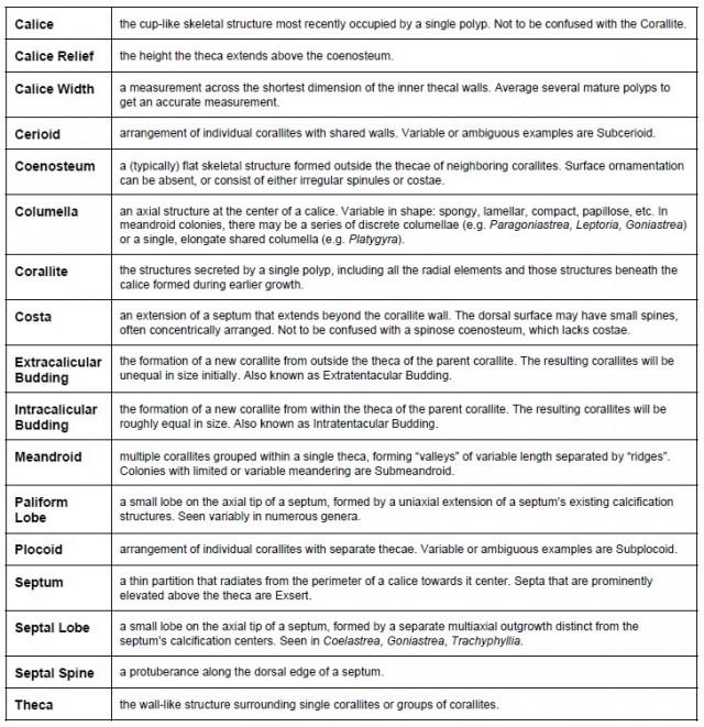 brain coral terms - reefs
