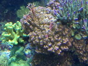 joe's tank justin - reefs