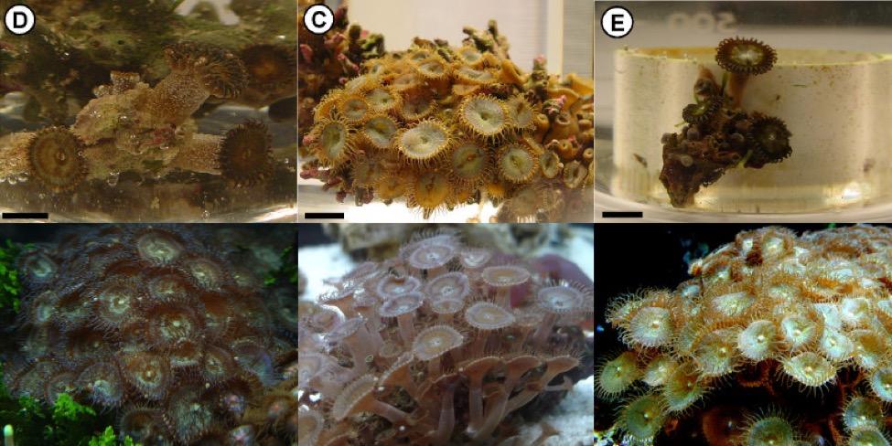palytoxin-reefs-blog-4