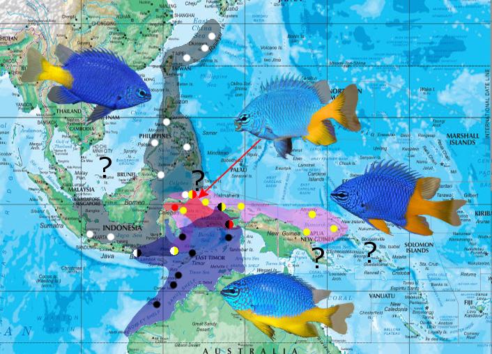 parasema map