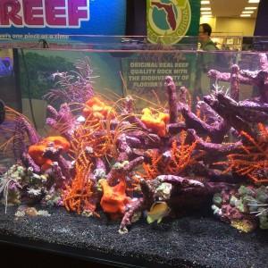 reefs.comMACNA2015