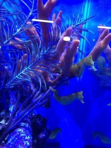 reefs.comMACNA20152