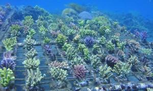 reefs.comMariAcro