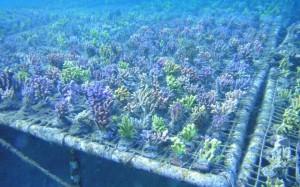 reefs.comMariAcro2
