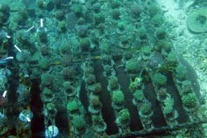 reefs.comMariEuphyllia
