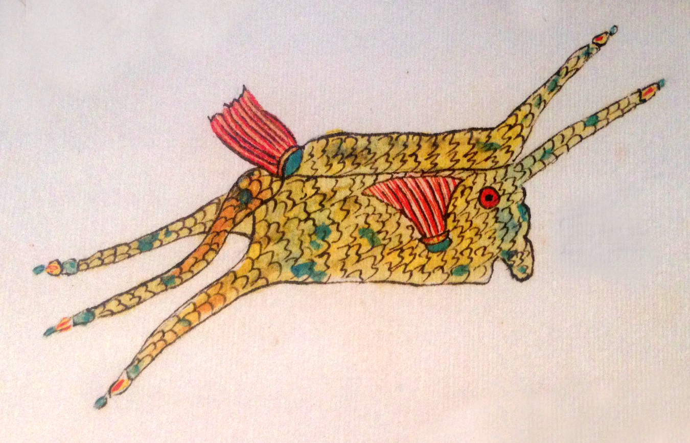 Fallours' drawing of a cowfish is only slightly less-bizarre than the actual fish.