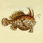 Marcus Elieser Bloch's 18th Century Fish Art