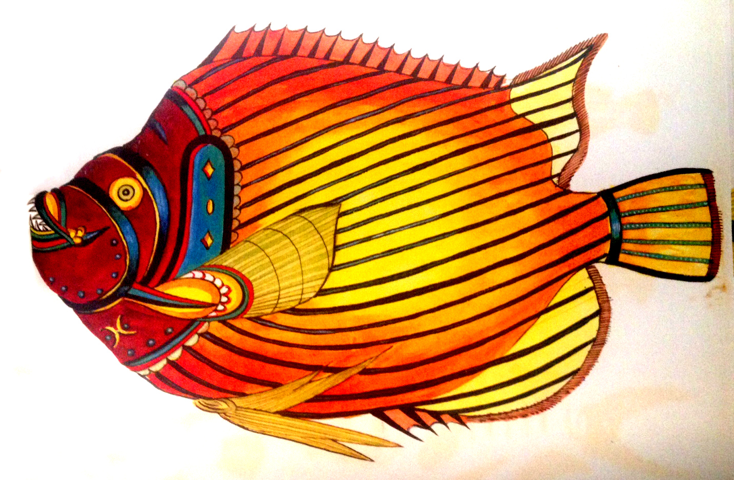 The Imperator Angelfish. Fallours accurately depicts the Pacific Ocean form, with its threadlike extension of the dorsal fin.