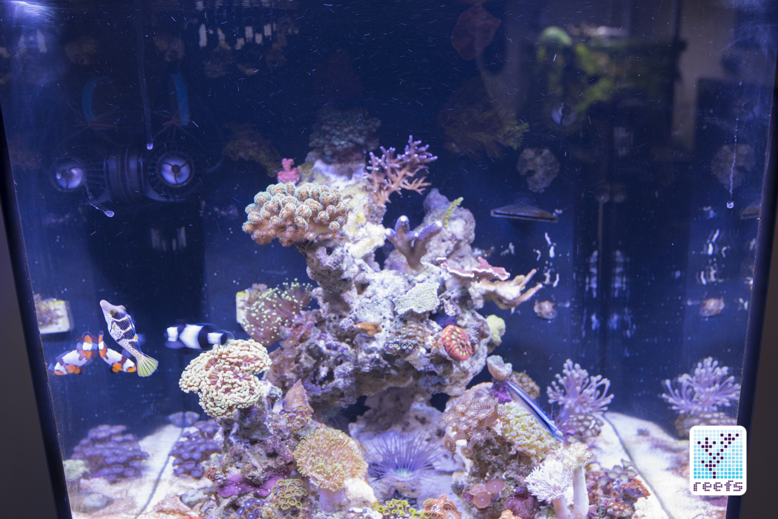Fluval marine reef led 20 review reefs fluval over authors aquarium aloadofball Image collections