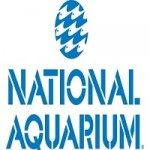 Science And Elbow Grease Keep National Aquarium Clean