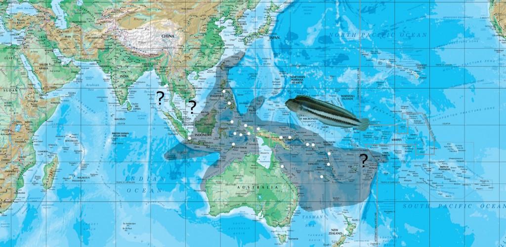anema map