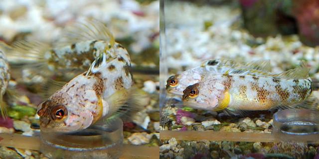 More specimens from the Japanese aquarium market. Credit: Aquarise